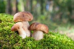 3 гриба Стоковое Изображение RF