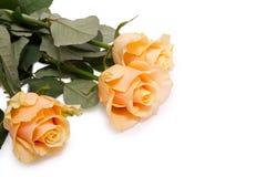 3 желтых розы на белизне Стоковое Изображение RF