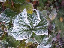 3 замороженные листья Стоковые Изображения RF
