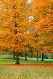 3 золотистых листь Стоковые Изображения RF