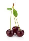 3 зрелых вишни Стоковые Изображения