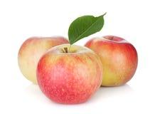 3 зрелых яблока Стоковое фото RF