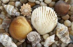 3 камня раковины Стоковая Фотография