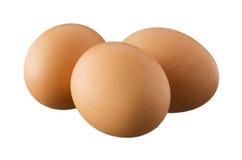 3 коричневых яичка изолированного на белой предпосылке Стоковые Фото