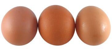 3 коричневых яичка Стоковые Изображения RF