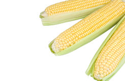 3 кукурузного початка Стоковая Фотография RF