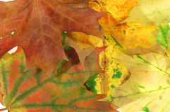 3 листь предпосылки Стоковое фото RF