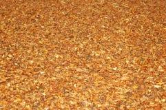 3 листь предпосылки Стоковые Фото
