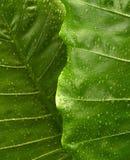 3 листь предпосылки Стоковая Фотография RF