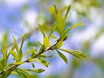 3 листь пущи молодого Стоковая Фотография RF