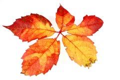 3 листь Стоковые Фото