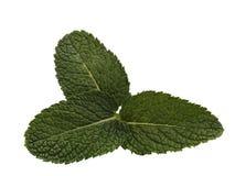 3 листь Стоковые Изображения