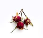 3 малых высушенных розы Стоковое Изображение RF