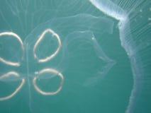3 медузы Стоковые Изображения