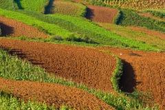 3 поля фарфора terraced Стоковые Фото