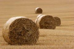 3 поруки field сено Стоковые Фотографии RF