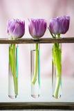 3 пурпуровых тюльпана в малом стекле Стоковое фото RF