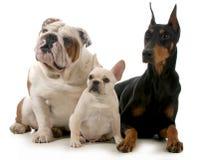 3 собаки Стоковые Изображения RF