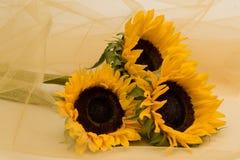 3 солнцецвета обернутого в желтой сети Стоковые Изображения RF