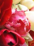 3 тюльпана палитры Стоковые Фотографии RF