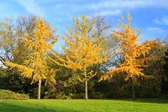 3 цветастых вала осени стоя в рядке Стоковое Изображение RF