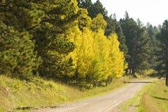 3 черных холма падения цветов Стоковая Фотография