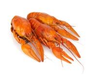 3 ых crayfishes Стоковые Изображения RF