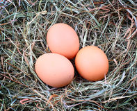 3 яичка цыпленка в сторновке Стоковые Изображения RF