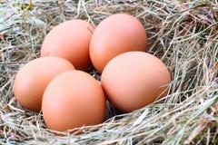 3 яичка цыпленка в сторновке Стоковая Фотография