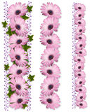 3 типа пурпура маргаритки границ Стоковое Фото
