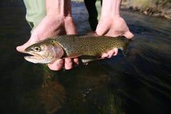 鱼#3 库存图片