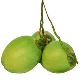 кокосы зеленеют изолировали белизну 3 Стоковые Изображения