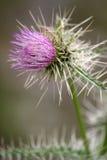 3朵花紫色蓟 免版税库存图片