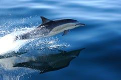 3 4 pospolity delfin Zdjęcia Royalty Free