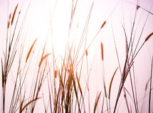 3 66第一时数轻的大草原 库存照片