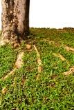 3 abstraktów barkentyna Zdjęcie Royalty Free