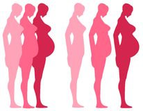 3 acetonidi della gravidanza   Fotografie Stock Libere da Diritti