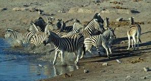 3 afrikanska djur Royaltyfri Bild
