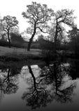 3 alberi Fotografia Stock