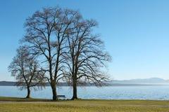 3 arbres au lac Images libres de droits