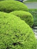 3 arbustos en jardín del parque Foto de archivo libre de regalías