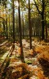 3 Bäume in der Hintergrundbeleuchtung Stockfotografie