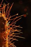 3 backlight cactus Στοκ Φωτογραφίες