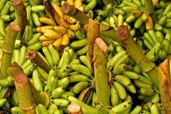3 bananer Fotografering för Bildbyråer