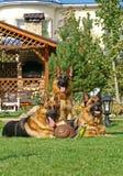 3 bergers allemands sur l'herbe Images libres de droits