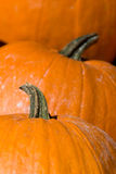 3 big Pumpkins Stock Images