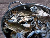 3 blåa krabbakrabbor strömförande Royaltyfria Foton