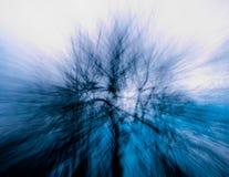 3 blåa trees zoom Arkivfoton