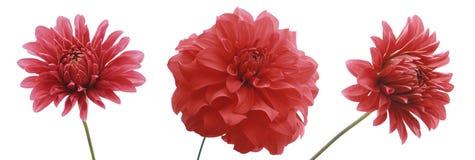 3 bloemen stock fotografie