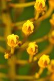 3 blommamakroserie Arkivbilder